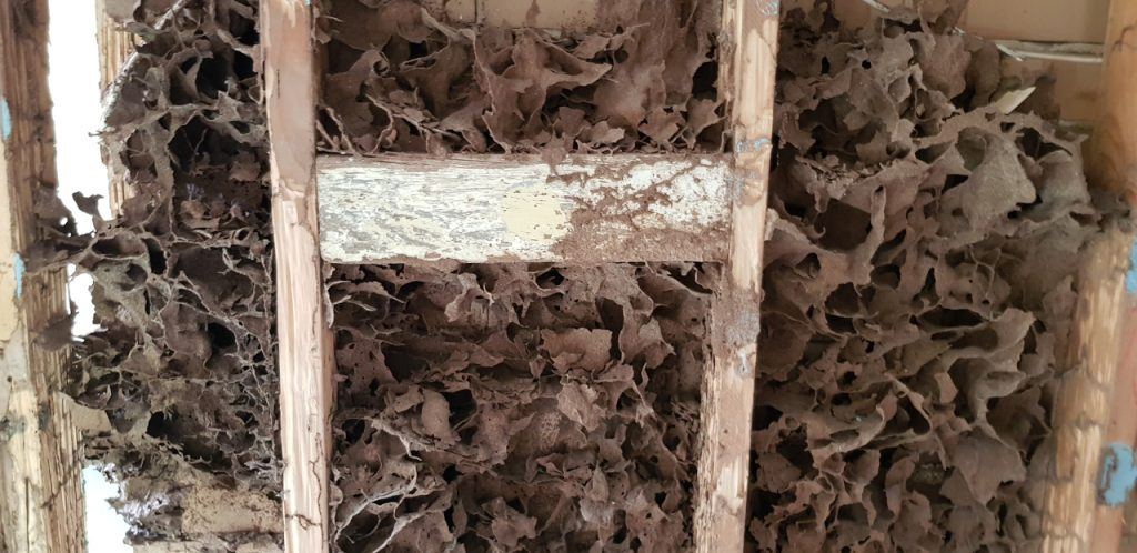 Termites - ask us for a pest inspection in Adelaide, Southern Suburbs, Adelaide Hills, Fleurieu Peninsula