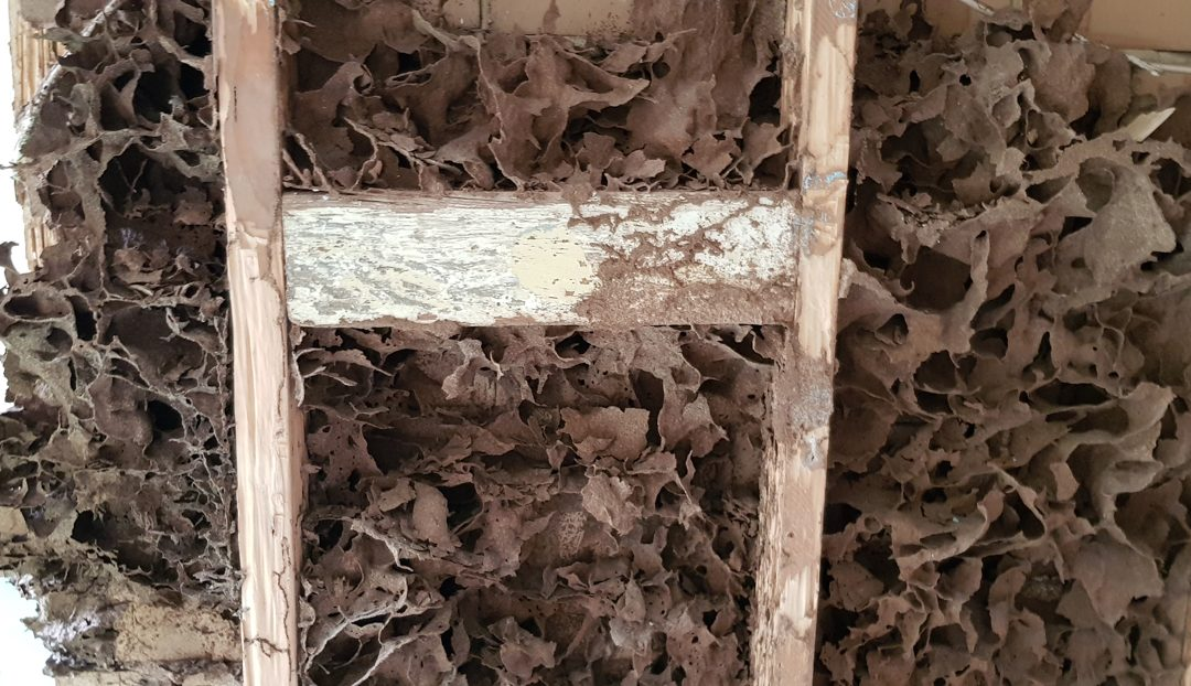 Are termites having a summer holiday in your home?